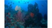 Underwater PNG dream